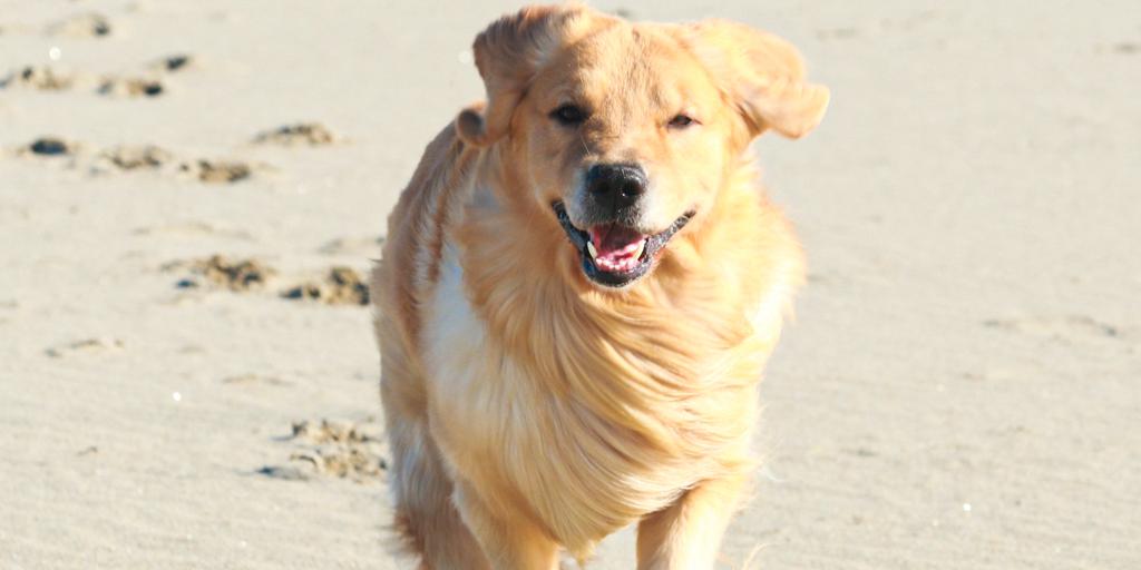 愛犬と一緒にSUP体験
